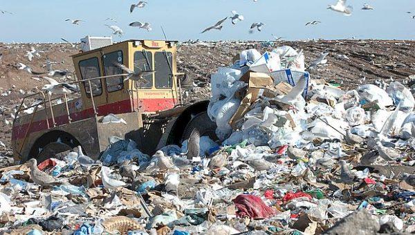Чиновники Тольятти отчитались о вывозе и переработке мусора с несанкционированных свалок