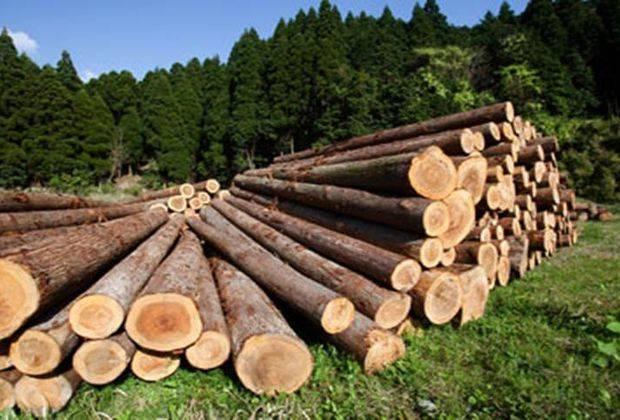 В самарском парке вырубили деревьев на 2 млн. рублей