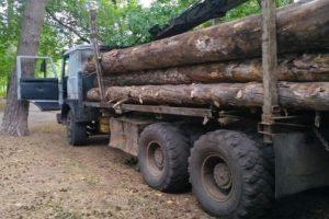 Очевидцы: на Механизаторов уже рубят лес