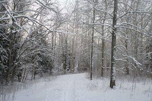 Прокуратура выяснит, как лесопарк попал в частную собственность